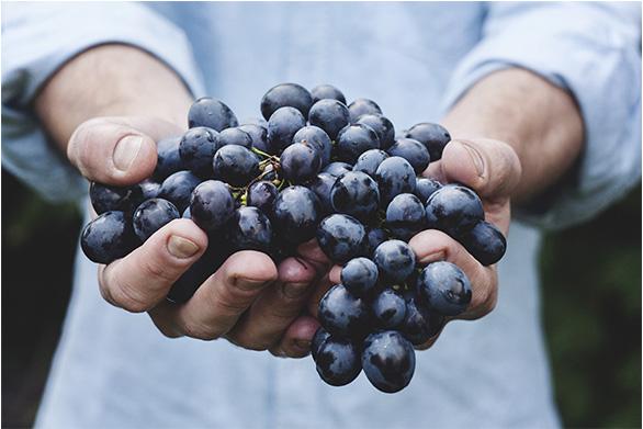 vins du monde en France chez South World Wines