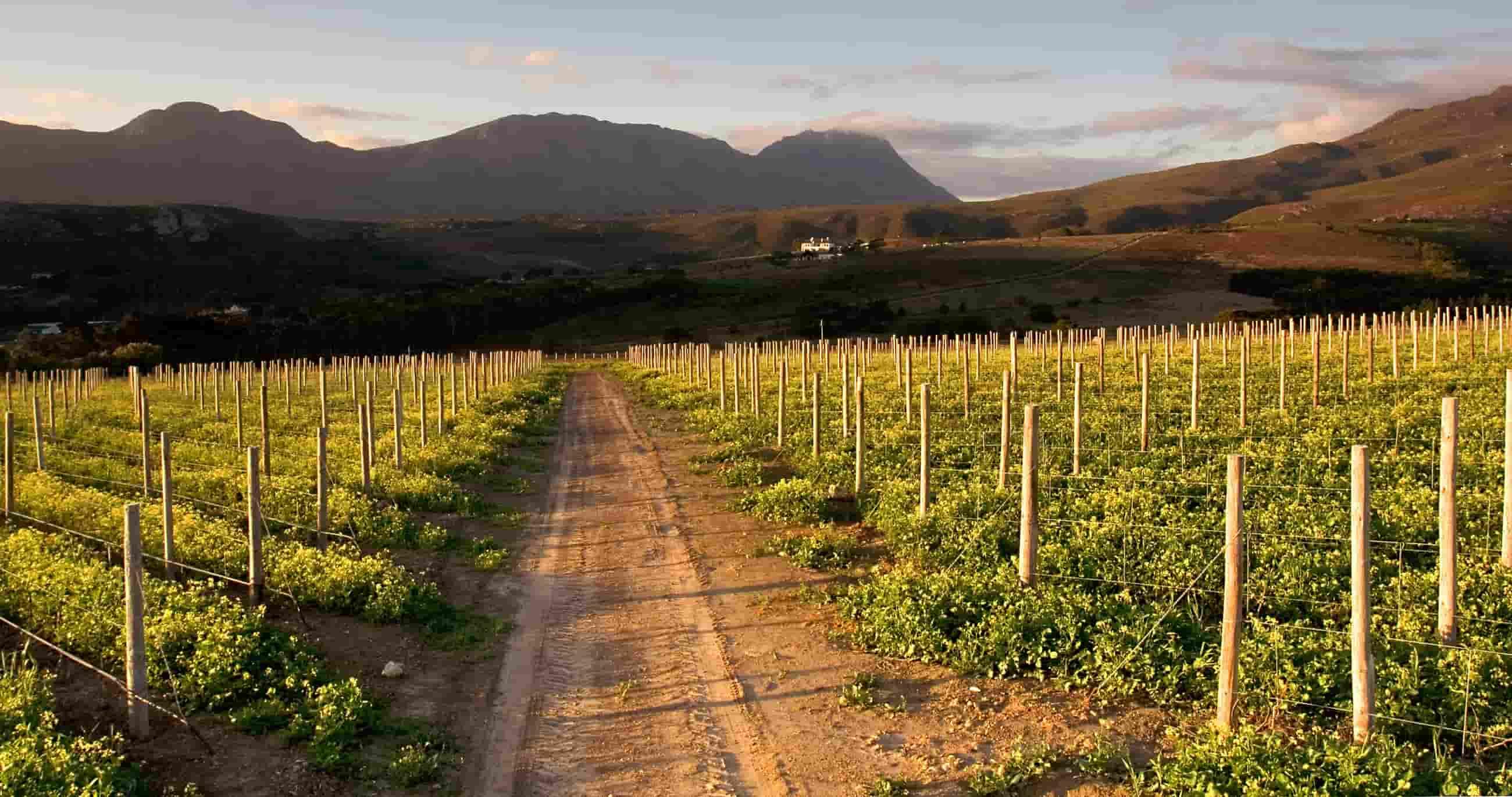 Les Vignes Blanches Beaucaire France