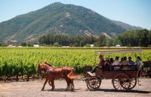 South World Wines importe et distribue des vins du monde. Spécialiste des vins étrangers en France. Retrouvez nos actualités