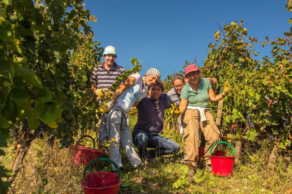 Volpaia vins Chianti Classico Italie vins étrangers South World Wines