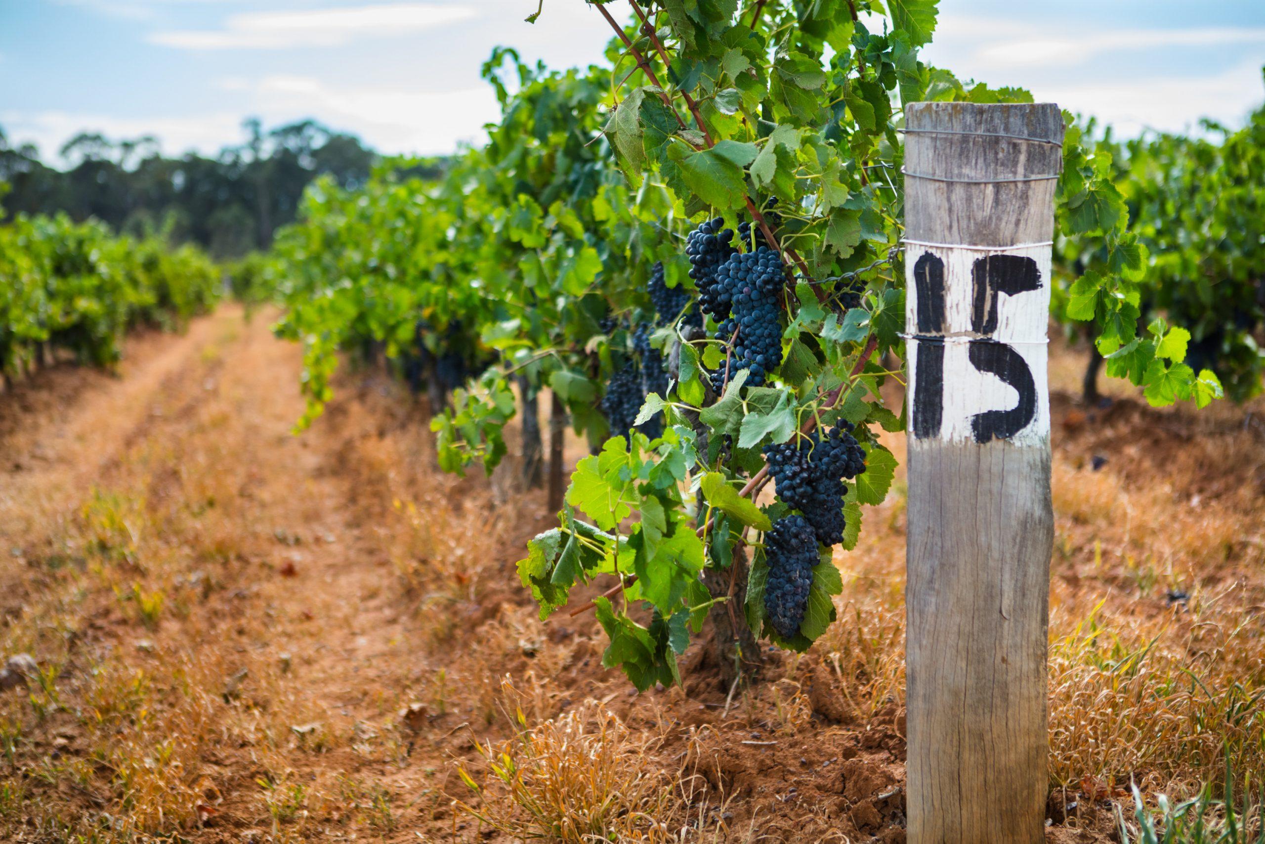 Francis Ford Coppola Winery Californie Vins californiens vins étrangers